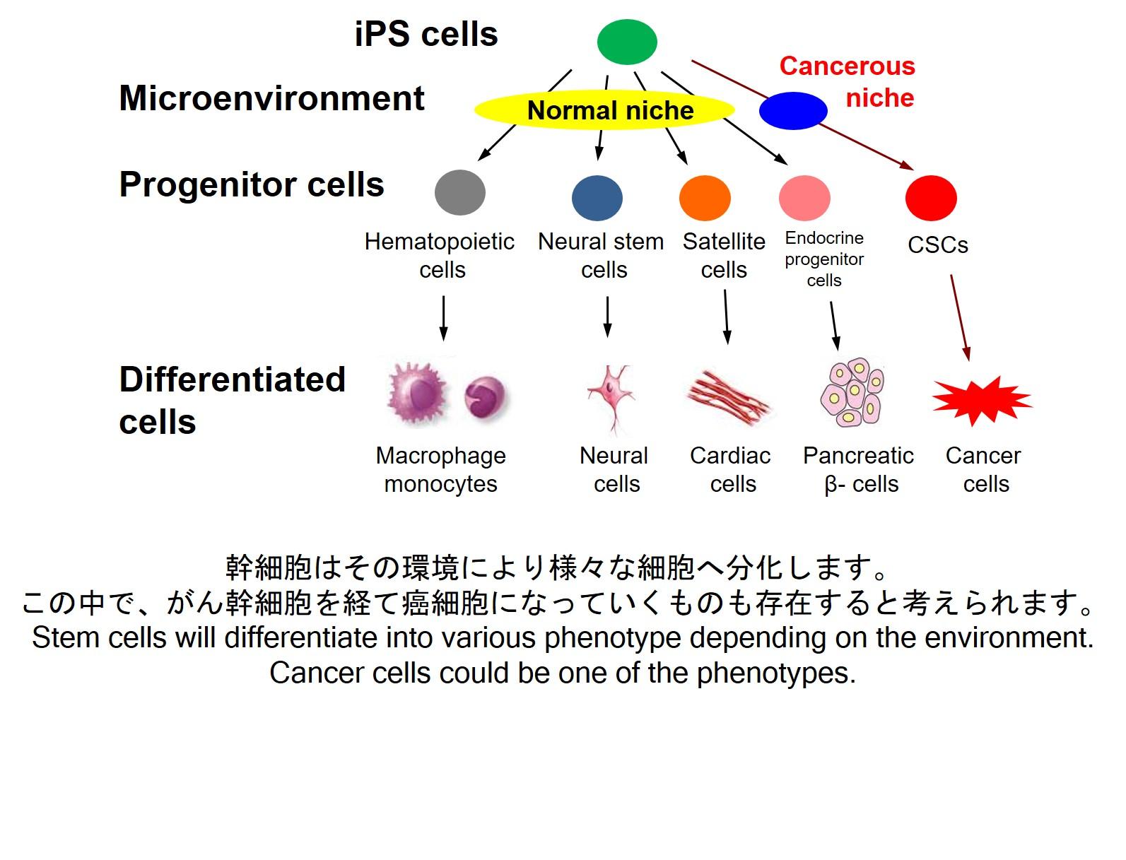 -がん幹細胞研究これまでに無かった新しいがん研究への挑戦-