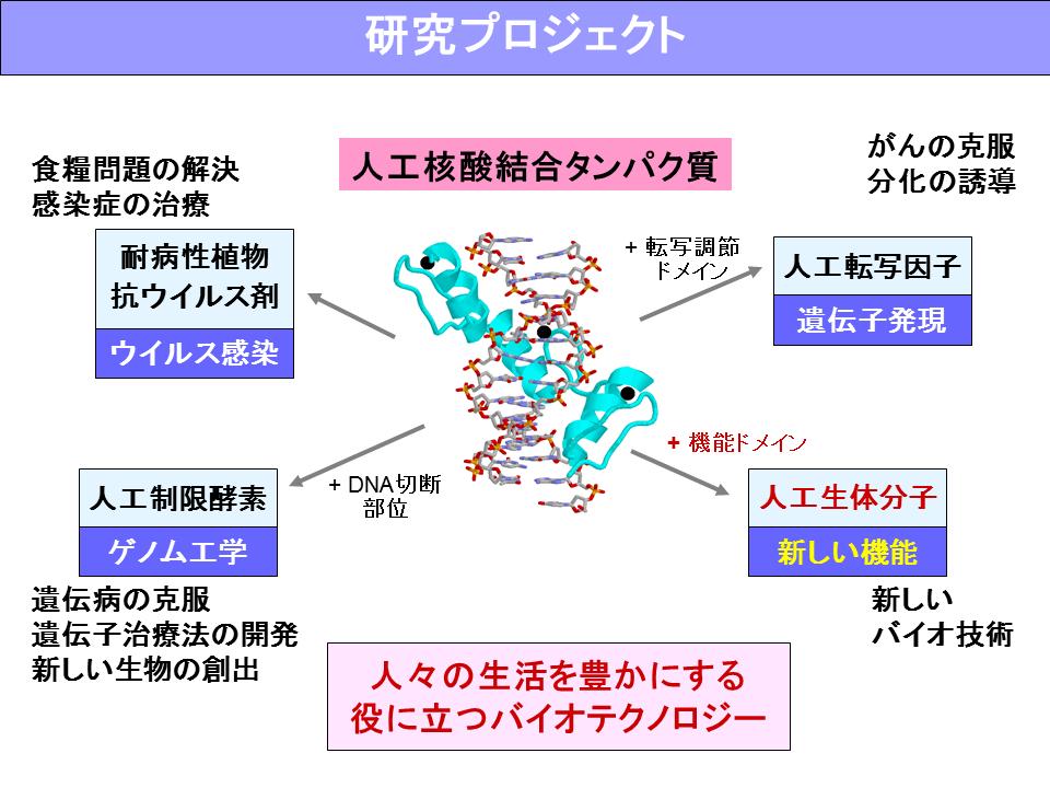 生体機能分子設計学分野
