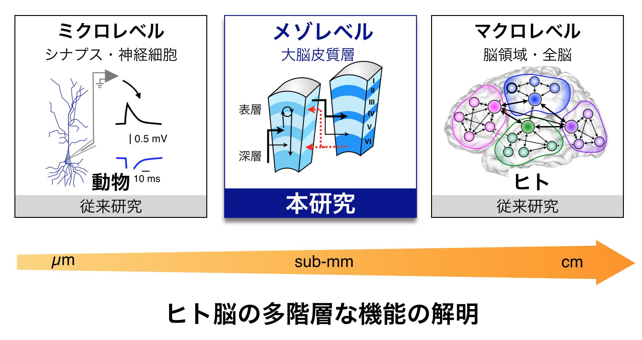 物体・素材認知機構の立体覚の観点からの解明と認知症早期診断技術への展開