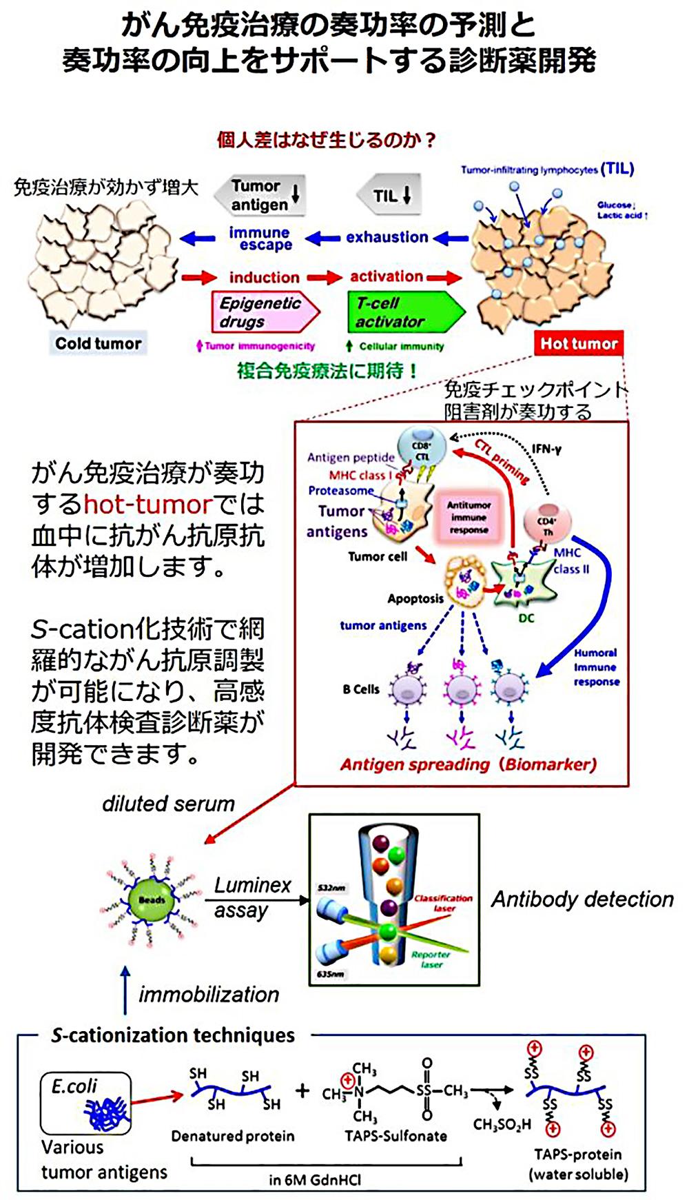 蛋白質医用工学分野