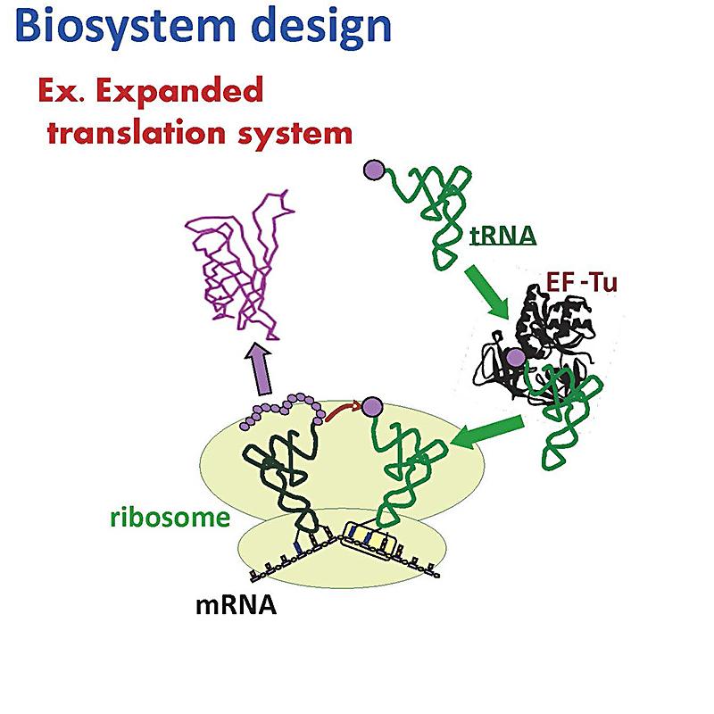生体分子工学分野