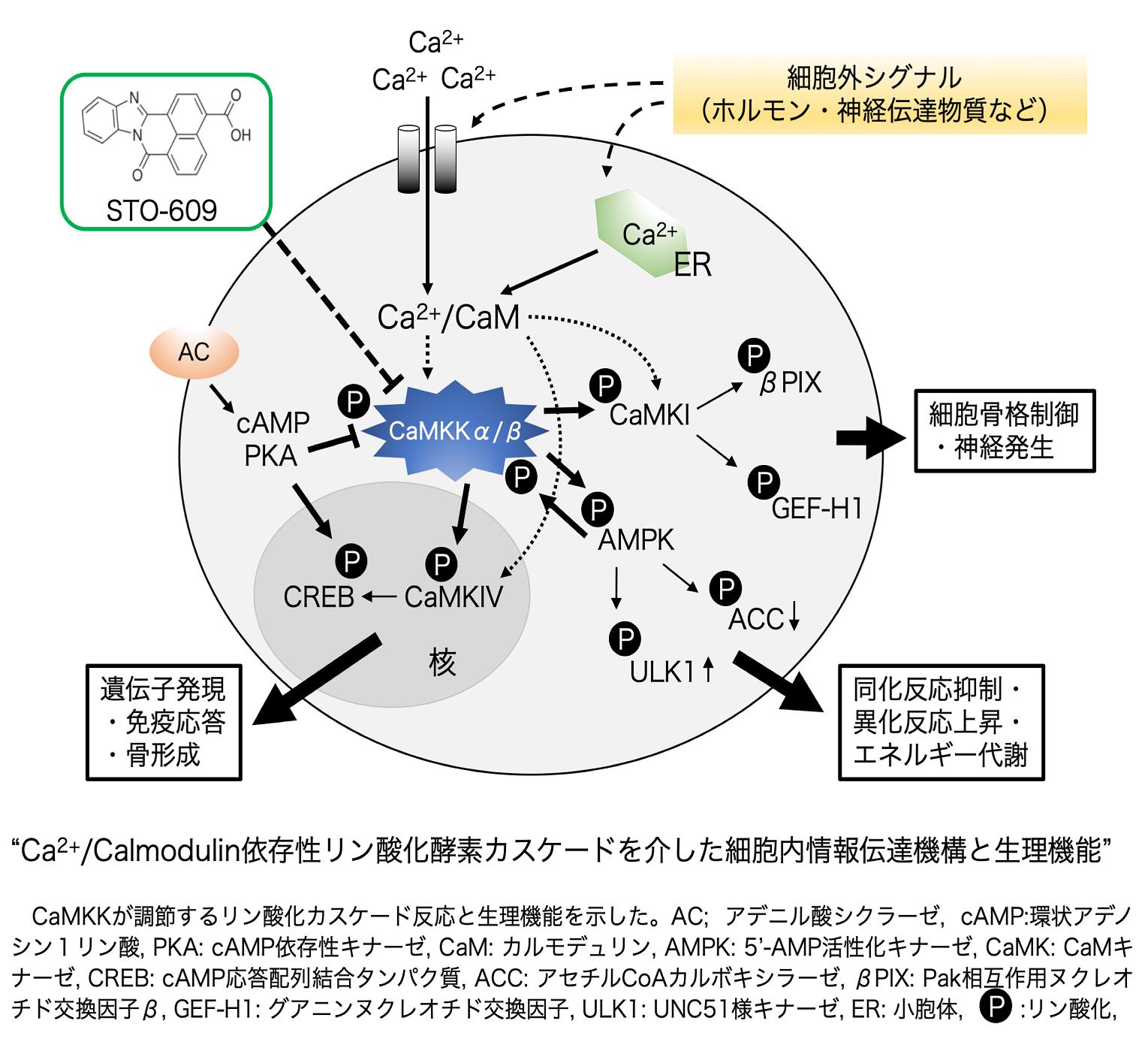 細胞機能設計学分野